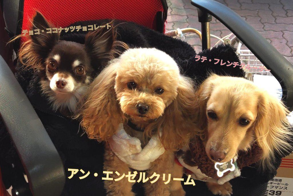 おてんばチアリーダー犬☆アンちゃん