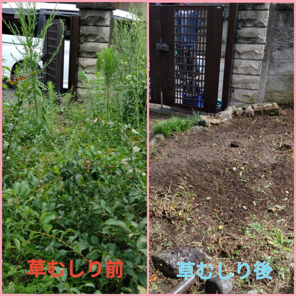 お庭の草むしり致します!