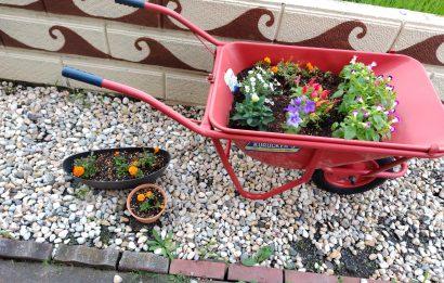 一輪車を花壇にしました♪